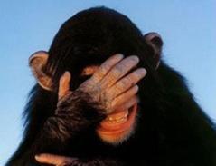 embarrassed-chimp